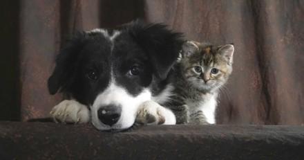 La cohabitation entre chien et chat : des conseils à suivre pour une bonne entente