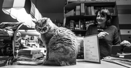 15 photos de chats qui travaillent dur au bureau