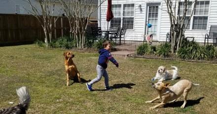 Un petit garçon dépense tout son argent de poche pour sauver deux Pitbulls