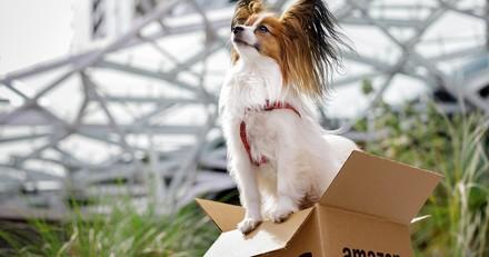Chien : tous les bons plans des Amazon Prime Day