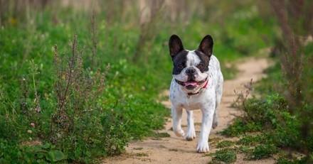5 règles pour une cohabitation heureuse avec son chien