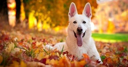4 façons de prendre soin de votre chien cet automne
