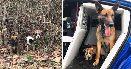 Un chien policier sauve 3 chiots abandonnés