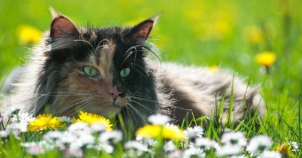 5 dangers du printemps pour le chat