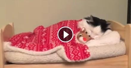 quand un chaton et dalmatien se font des bisous vid o du jour vid os wamiz. Black Bedroom Furniture Sets. Home Design Ideas
