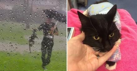 Sauvé in extremis de la noyade, ce chat a retrouvé sa famille