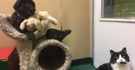 Coup de foudre : amis, ce rat, ce chien et ce chat abandonnés en refuge ont été adoptés ensemble !