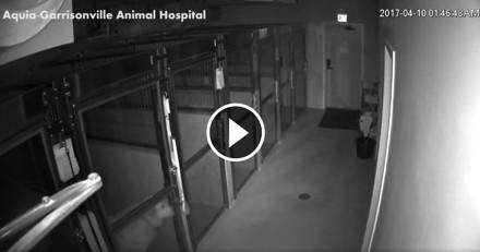 Bien décidé à ne pas passer la nuit chez le vétérinaire, ce chien ouvre la porte… et fuit !