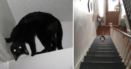 30 fois où les chats ont accidentellement révélé qu'ils étaient de vrais démons