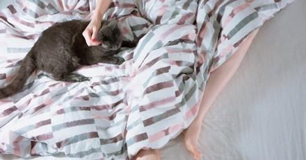 10 bonnes raisons de dormir avec son chat
