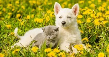 Le chien est l'animal préféré des Français… mais il n'est pas le plus présent dans leur foyer !