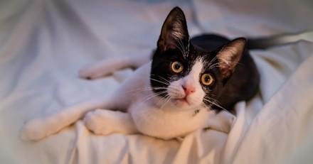 Un chat mord sa propriétaire au milieu de la nuit pour sauver sa famille d'un incendie