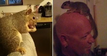 Un écureuil fait fuir un voleur venu cambrioler la maison de ses sauveurs