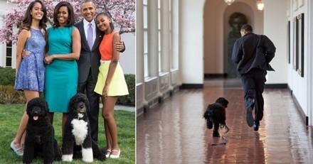 20 fois où les chiens Bo et Sunny Obama ont illuminé la vie de la Maison Blanche