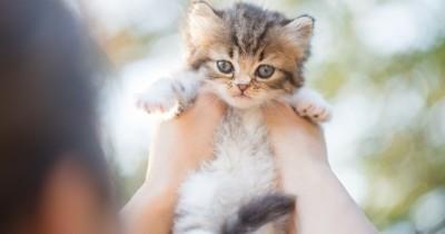Je veux un chat : quelle race choisir ?