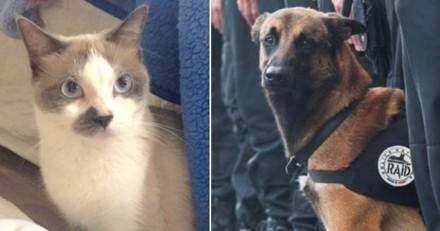 Les plus belles histoires de chattes et chiennes héroïques qui ont sauvé des humains