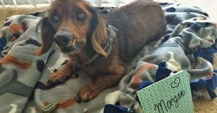 Plus vivant que jamais, un chien âgé de 18 ans réalise ses derniers vœux
