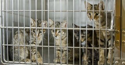 Massacre à la SPA Vauclusienne : plusieurs chats battus puis tués