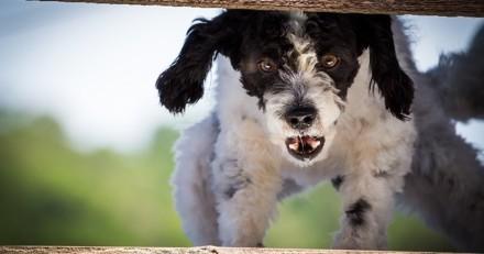 L'agressivité chez le chien : comment l'éviter ?