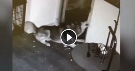 Ce chien est un génie : il s'évade de chez le vétérinaire et libère ses congénères ! (Vidéo du jour)