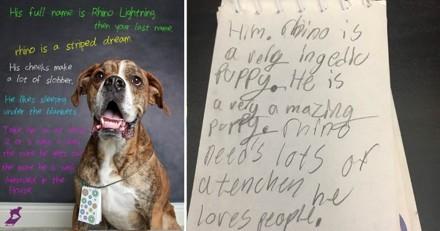 Un chien a été abandonné dans un refuge avec la lettre déchirante d'un enfant accrochée au cou
