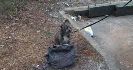 L'histoire de ce chien découvert attaché à une benne à ordures avec un petit mot est déchirante…