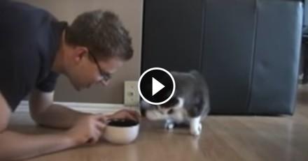 Ce chat surprend son maître en train de manger sa gamelle... et a la plus drôle des réactions ! (Vidéo du jour)