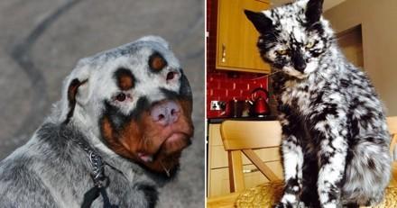 20 chats et chiens atteints de vitiligo qui ont un pelage magnifique