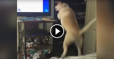 Ce chien est prêt à tout pour jouer avec celui qu'il voit dans la télé (Vidéo du jour)