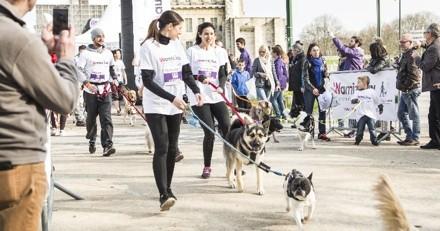 Wamiz Run : dimanche, c'est votre chien qui vous a sorti !