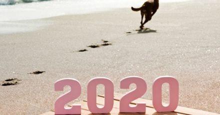 10 bonnes résolutions pour 2020 pour les futurs propriétaires de chiens !