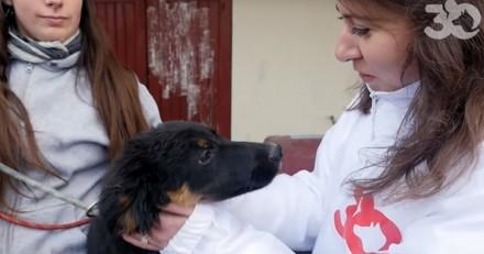 91 animaux maltraités sauvés d'une maison de l'horreur