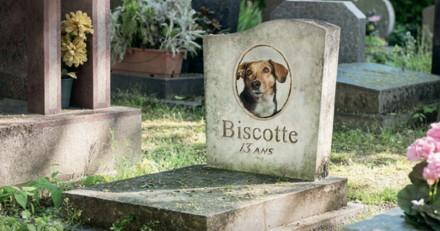 Quand un chien abandonne son maître, ce n'est pas pour partir en vacances (Vidéo)