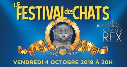 Festival des Chats : les matous squattent le Grand Rex pour une soirée de folie !