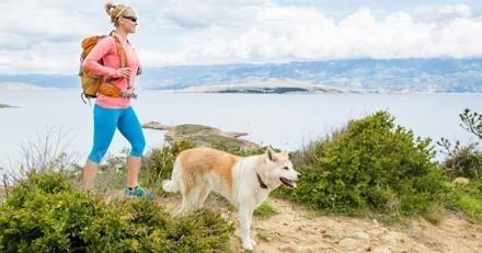 5 idées pour faire le bonheur de son chien pendant l'été