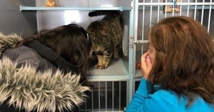 Un chat disparaît : 2 ans plus tard sa famille s'effondre en visitant un refuge