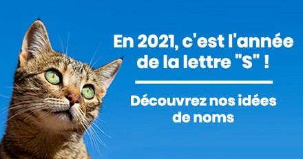 Nom de chat en S pour l'année 2021 : trouvez de l'inspiration pour le prénom de votre chat !