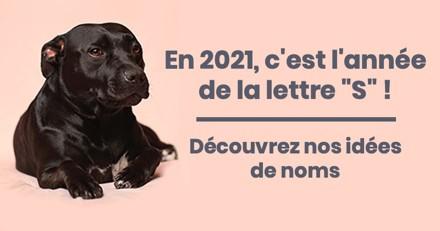 Nom de chien en S pour l'année 2021 : trouvez de l'inspiration pour le prénom de votre chiot !