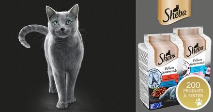 Testez l'alimentation Sheba® Délices Gourmands pour chats