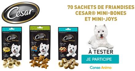 Testez les friandises Cesar Mini-Bones et Mini-Joys avec votre chien