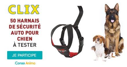 Testez le harnais de sécurité auto Clix Car Safe avec votre chien !