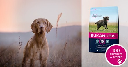 Testez les croquettes Eukanuba Adulte Grande Race riche en Poulet Frais avec votre chien