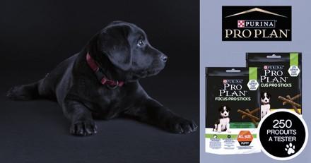 Testez les PURINA® PRO PLAN® Focus PRO Sticks avec votre chiot