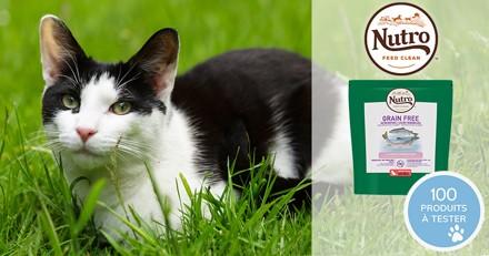 Testez les croquettes NUTRO™ GRAIN FREE pour chat adulte au saumon et poissons blancs