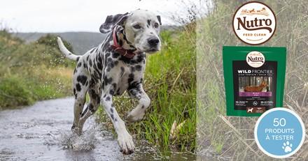 Testez les croquettes Nutro Wild Frontier au cerf et bœuf avec votre chien