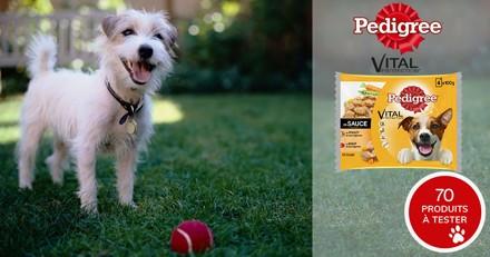 Testez les sachets fraîcheur Pedigree® Vital Protection™ en sauce avec votre chien