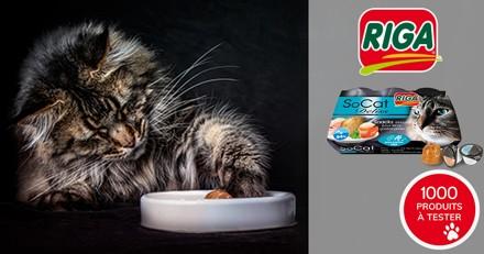 Testez les friandises RIGA SoCat Deliss avec votre chat