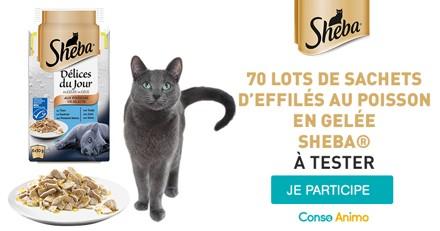 Testez les Délices du Jour au poisson en gelée Sheba avec votre chat