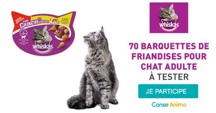 Testez les friandises Whiskas Trio Crunchy Treats avec votre chat adulte !
