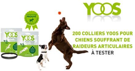 Testez le collier YOOS avec votre chien souffrant de raideurs articulaires !